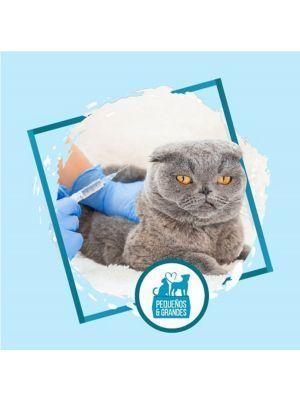 Vacunación a domicilio Gato refuerzo de Adultos- Ciudaddemascotas
