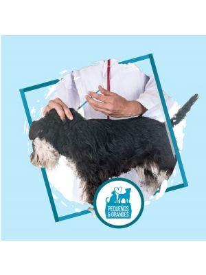 Vacunación a domicilio perro Rabia o Tos Perrera-Ciudaddemascotas