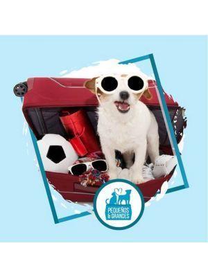 Tramitación para Viajes de Mascotas - Ciudaddemascotas.com