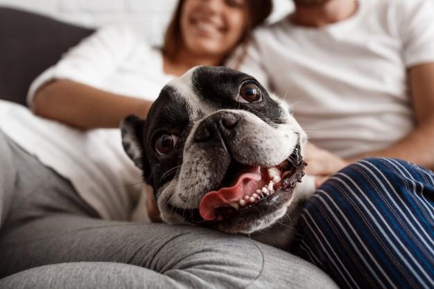 Cuidados de las mascotas: perros y gatos