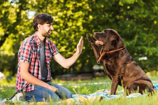 Perros de campo vs perros de hogar
