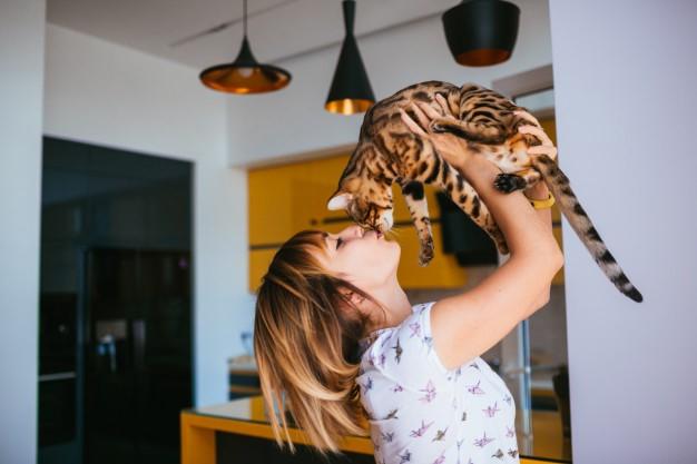 Recomendaciones sobre cual es la mejor comida o alimento para tu gato
