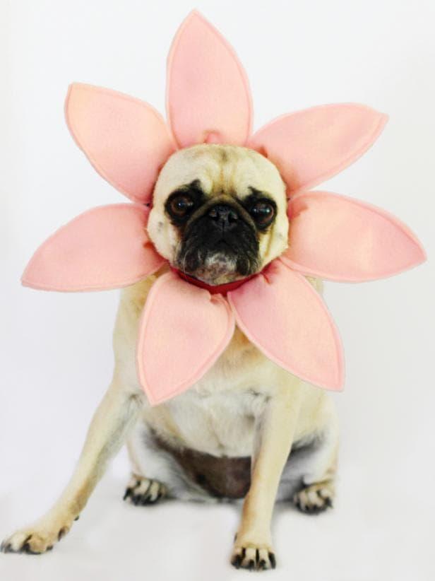 Disfraz de florecita para perritas