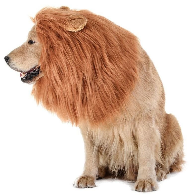 disfraz de golden retriever para perros