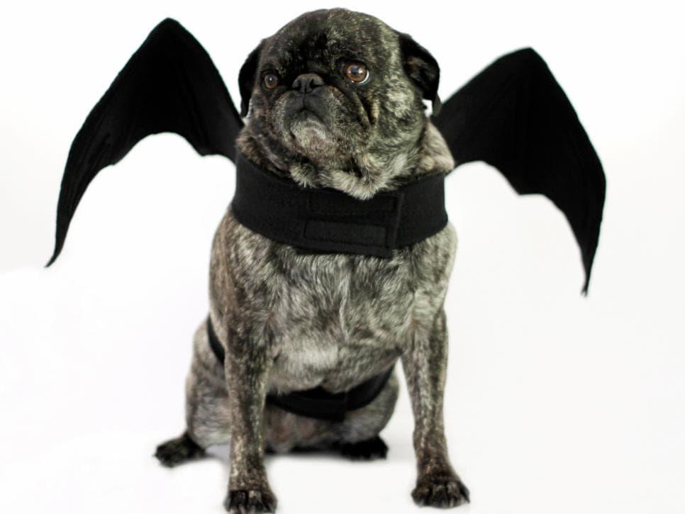 Disfraz de pug para perros