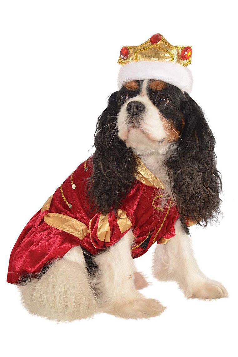 Disfraz Cavalier King Charles spaniel