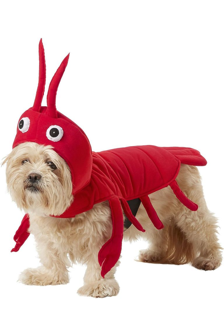 disfraz para yorkshire terrier