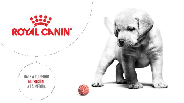Royal Canin para Perros