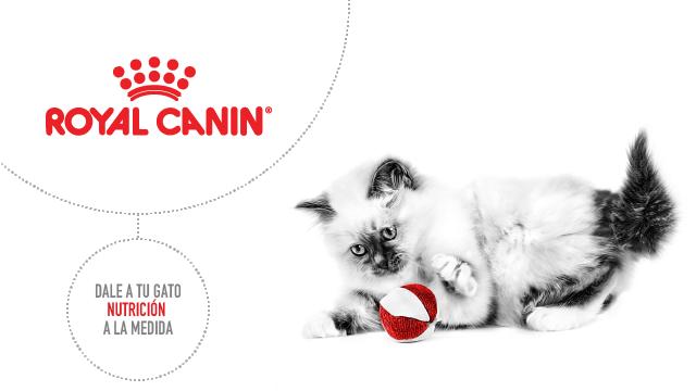 Royal Canin para Gatos