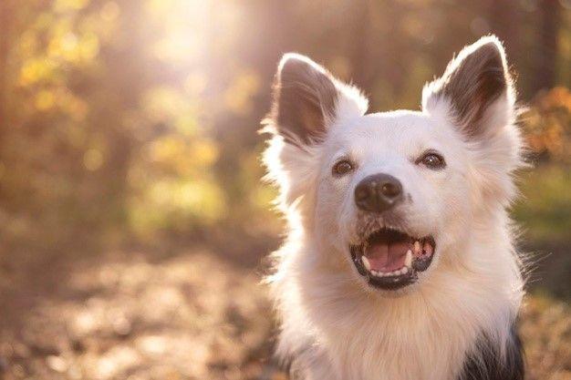 ¿Cómo educo a mi perro? Las mejores recomendaciones y prácticas