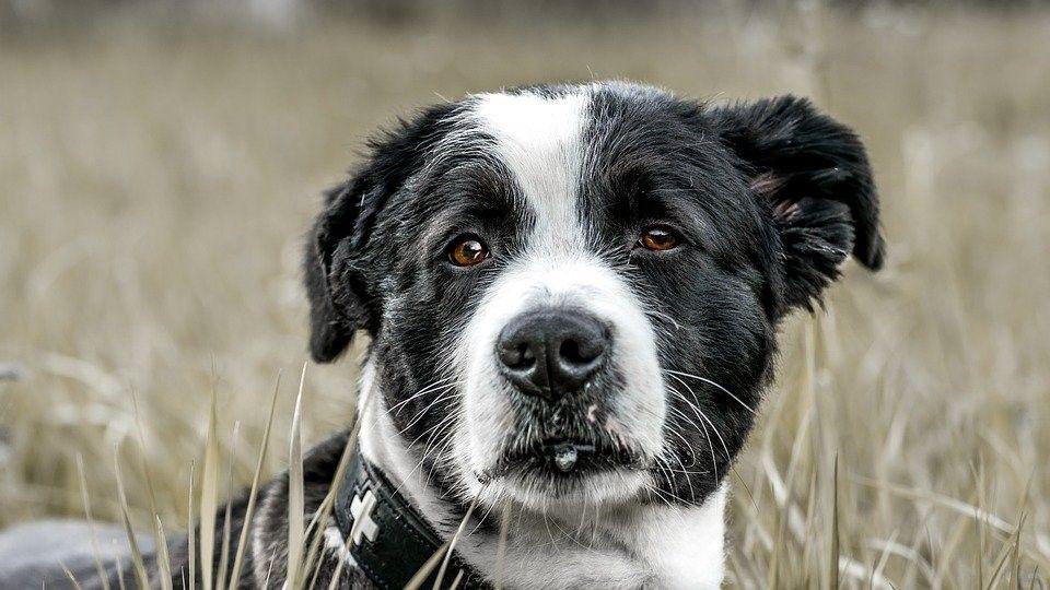 Hocico del perro y sus curiosidades