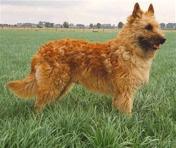 Perros de campo vs perros para tener en casa